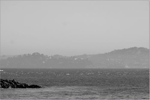 ligne de nageurs vers Alcatraz